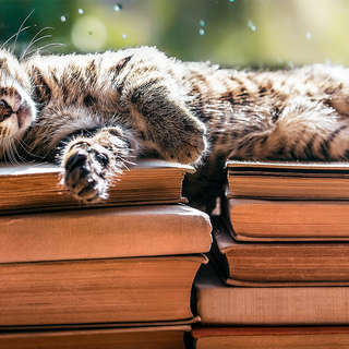 Little tabby cat laying on book