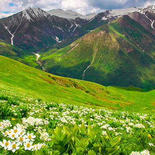 White flowers, meadow, mountains